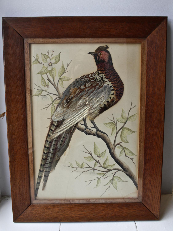 Oak framed Pheasant Picture