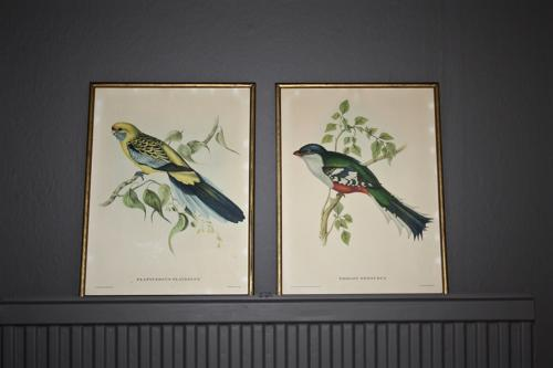 Pair of John Gould prints