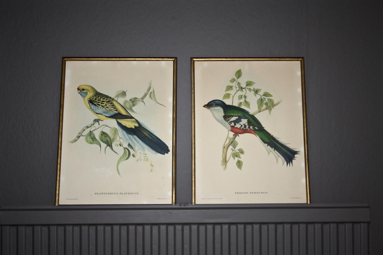Pair of John Gould prints
