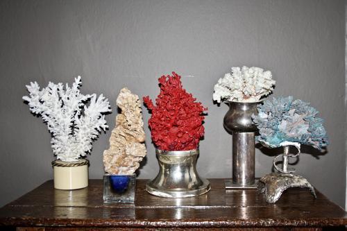 Decorative coral displays