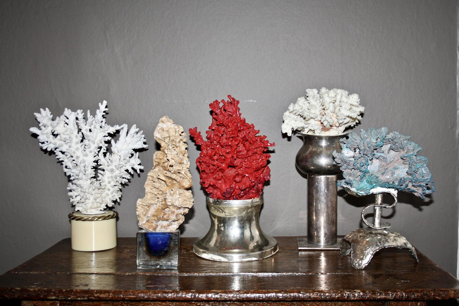 Decorative coral displays