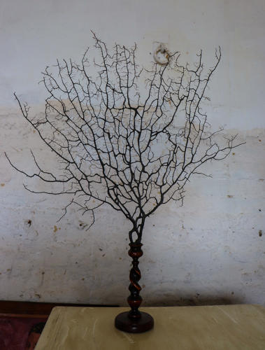 Natural tree coral on twisted stem mahogany base