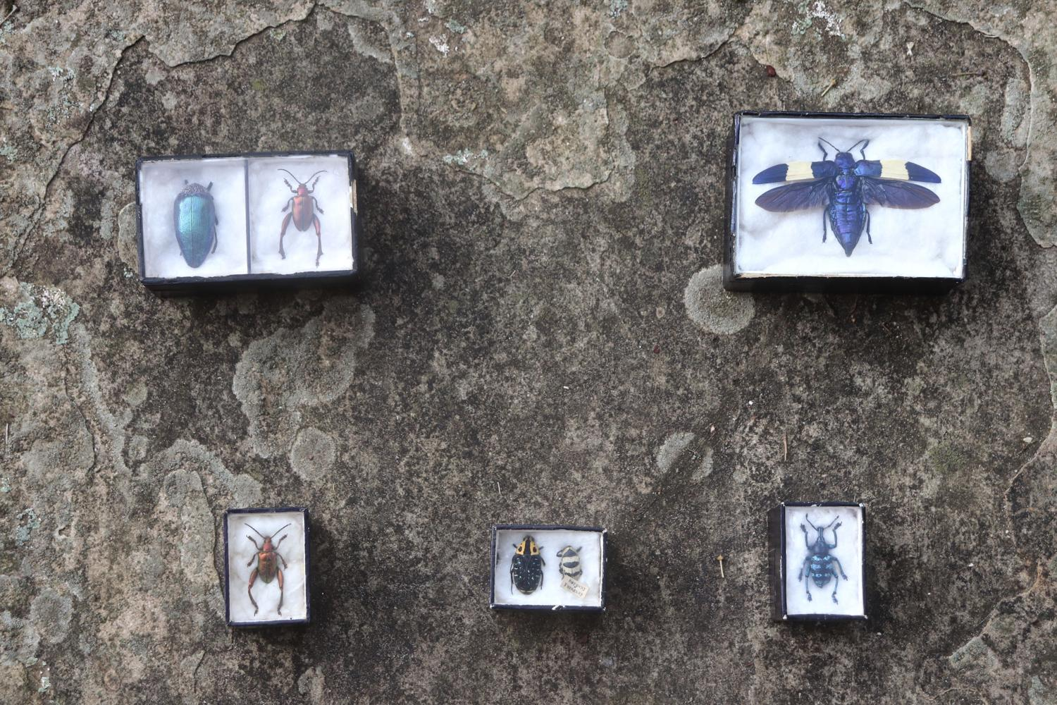 Selection of boxed insects