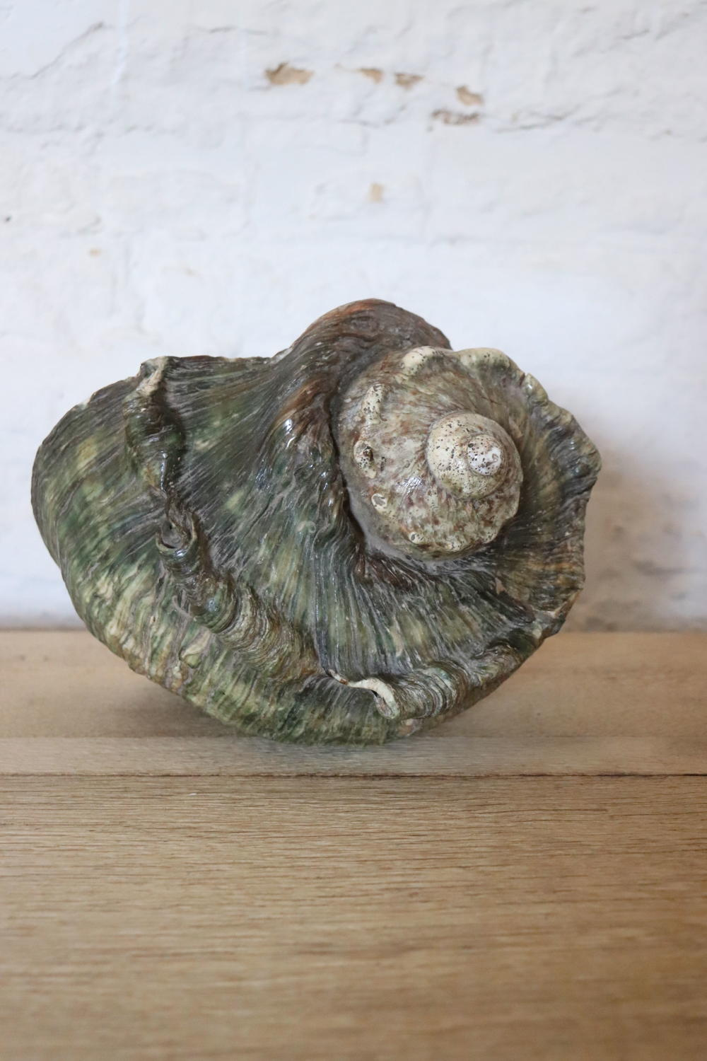 Large green conch shell