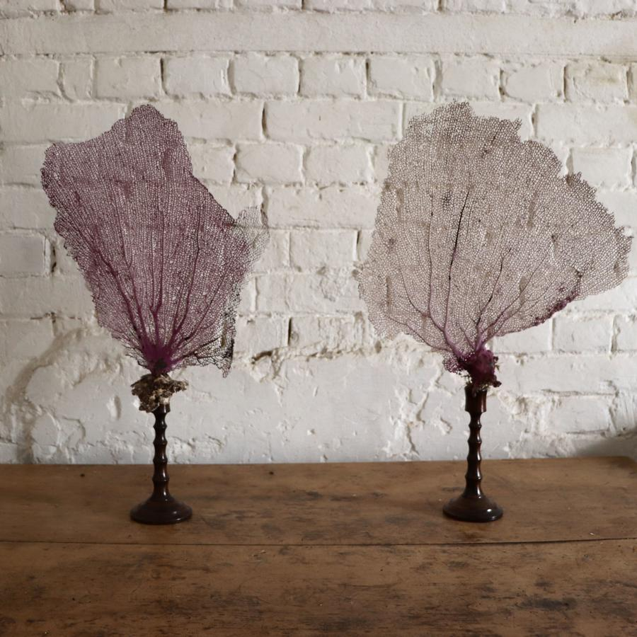 Fan coral mounted on vintage wooden stands