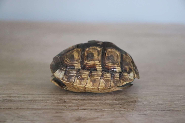Victorian tortoiseshell and velvet pin cushion