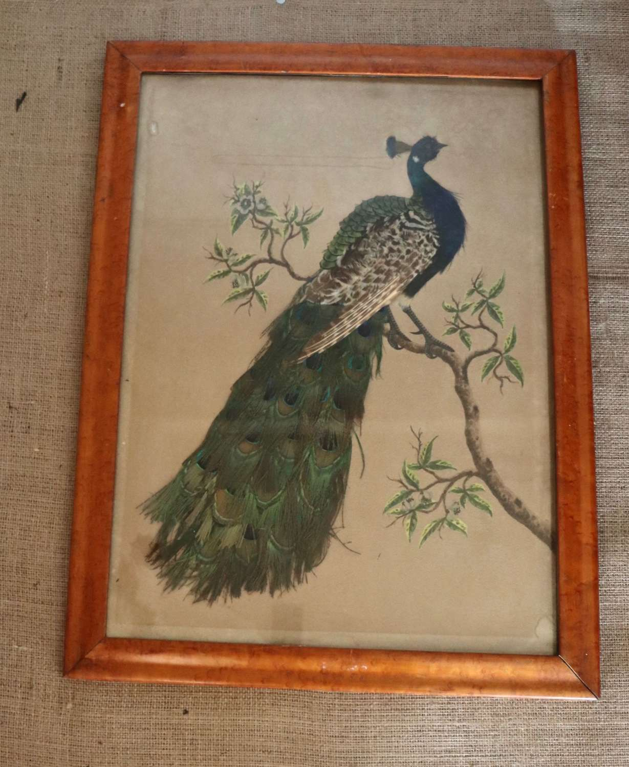 19th century peacock feather picture in maple frame