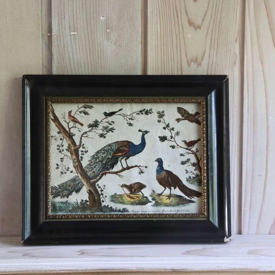 Georgian handcoloured print of birds