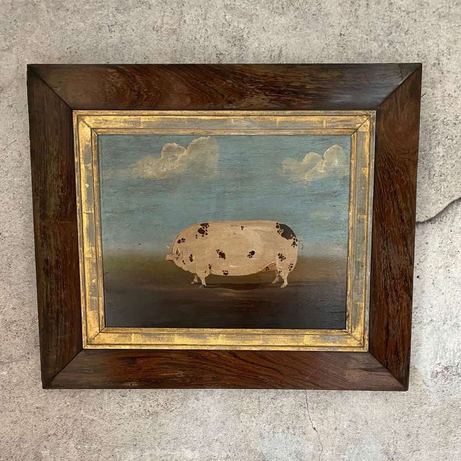 Oil of pig on board